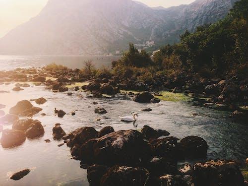 Amazing landscape of mountainous seashore with floating swans