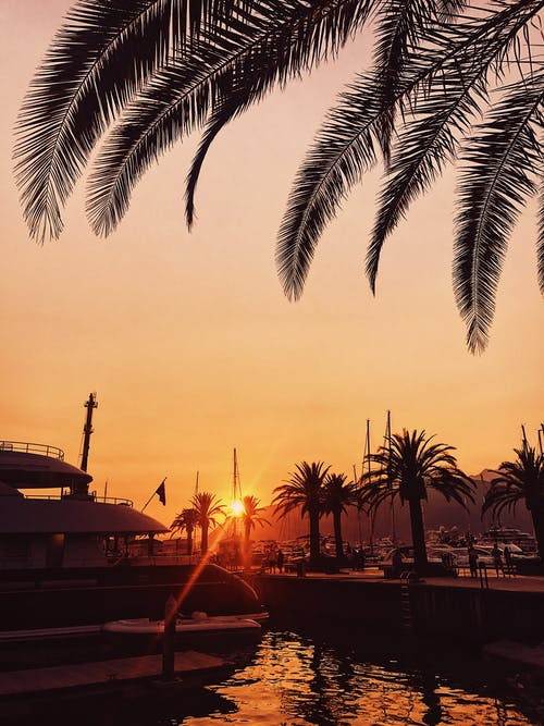 Harbor and palms against amazing sundown sky