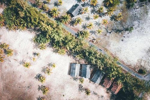 Gratis lagerfoto af arkitektur, blad, bygning, drone kamera