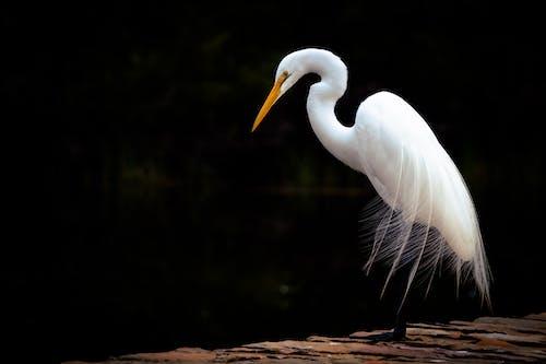Fotos de stock gratuitas de alas, animal, aviar, de perfil