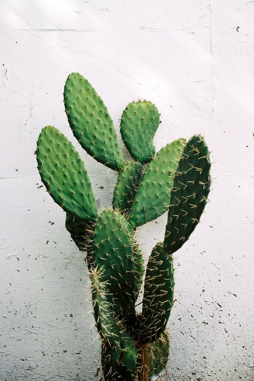 Green Cactus Plant Against White Wall