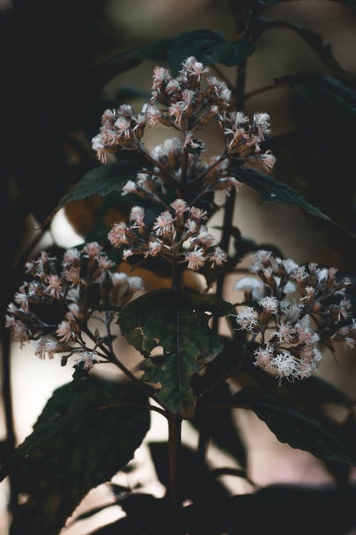 Free stock photo of flores, kraftflowers, landscape, naturaleza