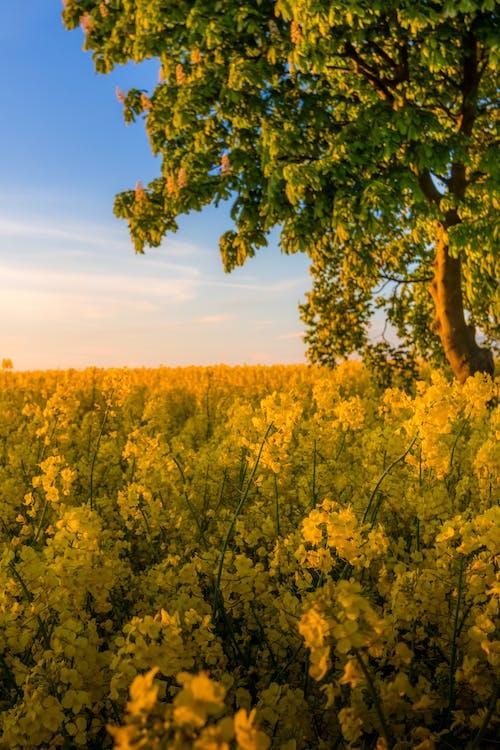 Free stock photo of beautiful, beautiful flowers, beauty, blurred