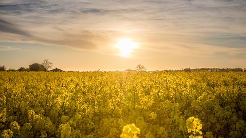 Základová fotografie zdarma na téma farma, hřiště, idylický, krajina