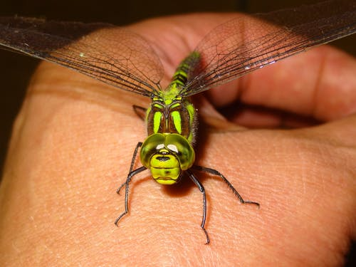 Gratis stockfoto met close-up, detailopname, hand, insect
