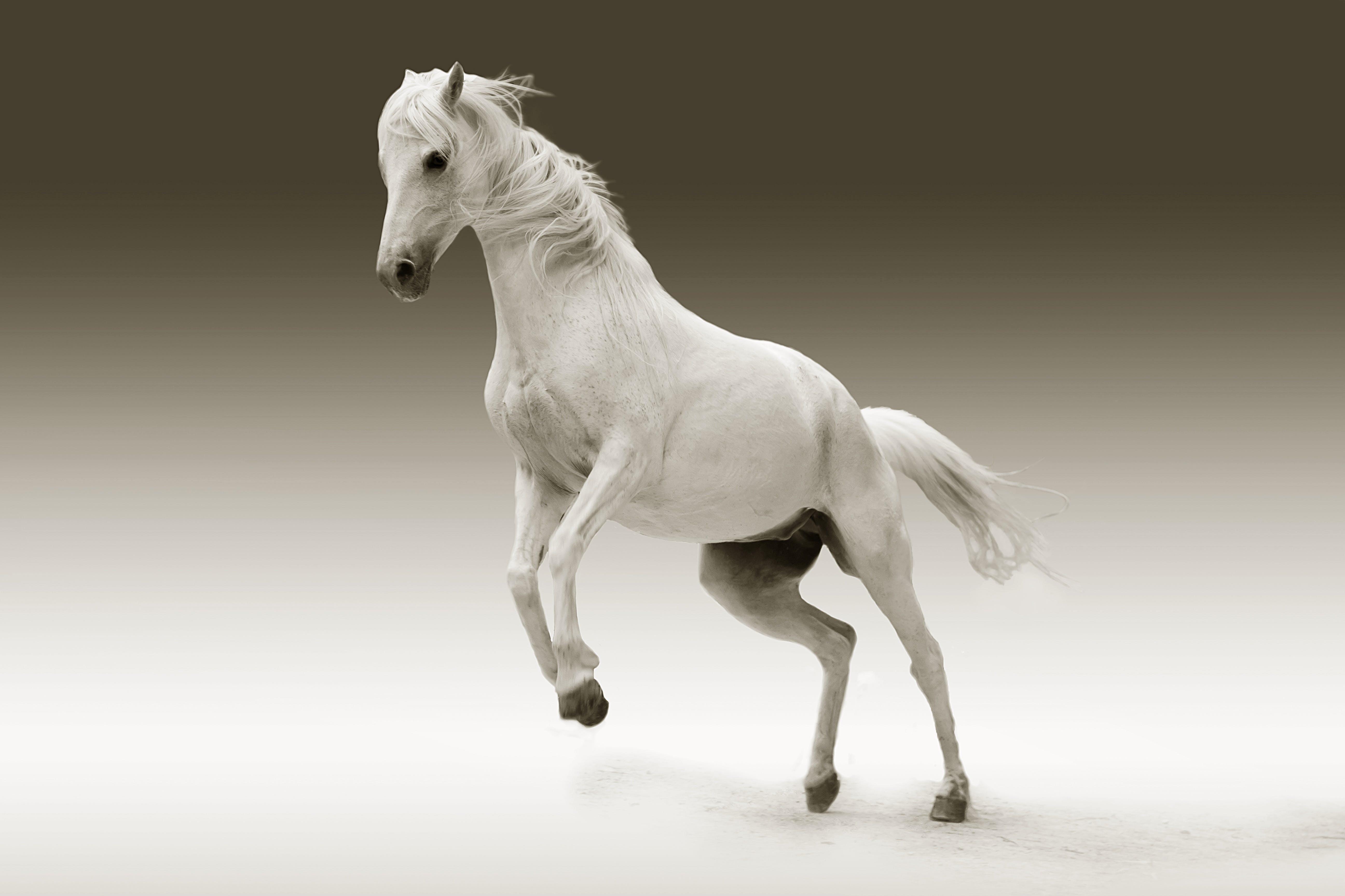Leaping White Horse Illustration