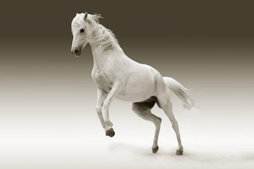Free stock photo of animal, white, mane, horse