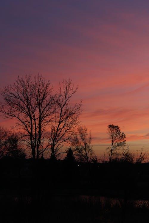 Gratis lagerfoto af bagbelyst, dramatisk, grene, himmel
