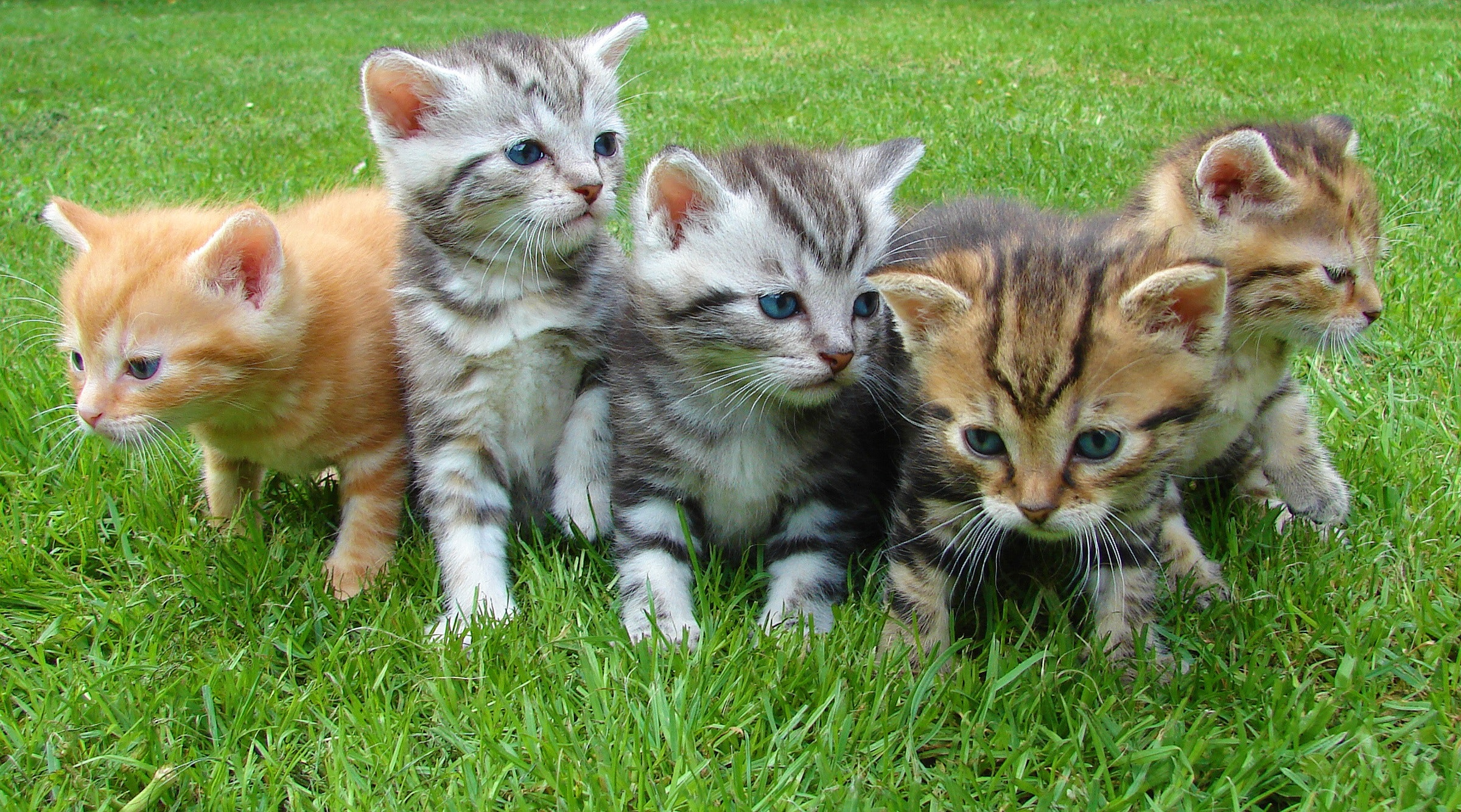 Assorted Color Kittens Free Stock Photo