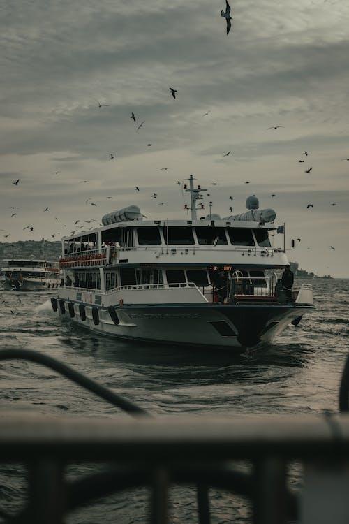 Flock of birds above cruise ship