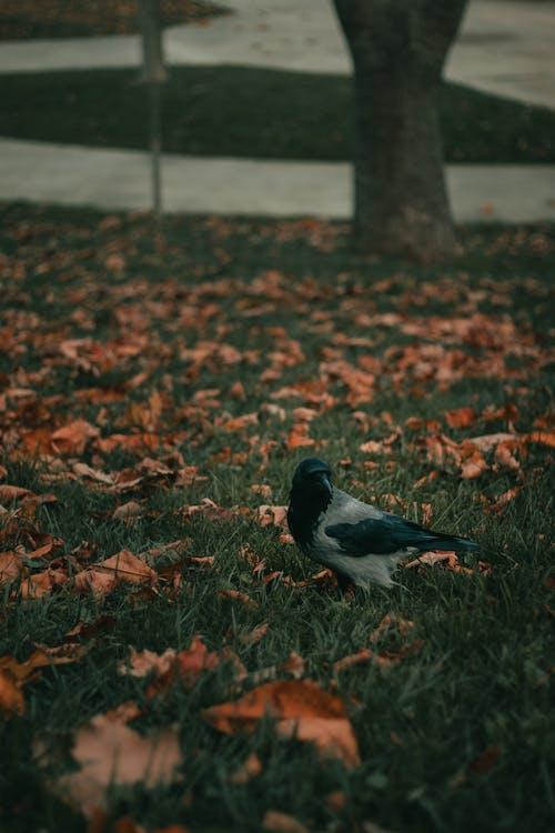 Foto stok gratis alam, bangsa burung, binatang, botani