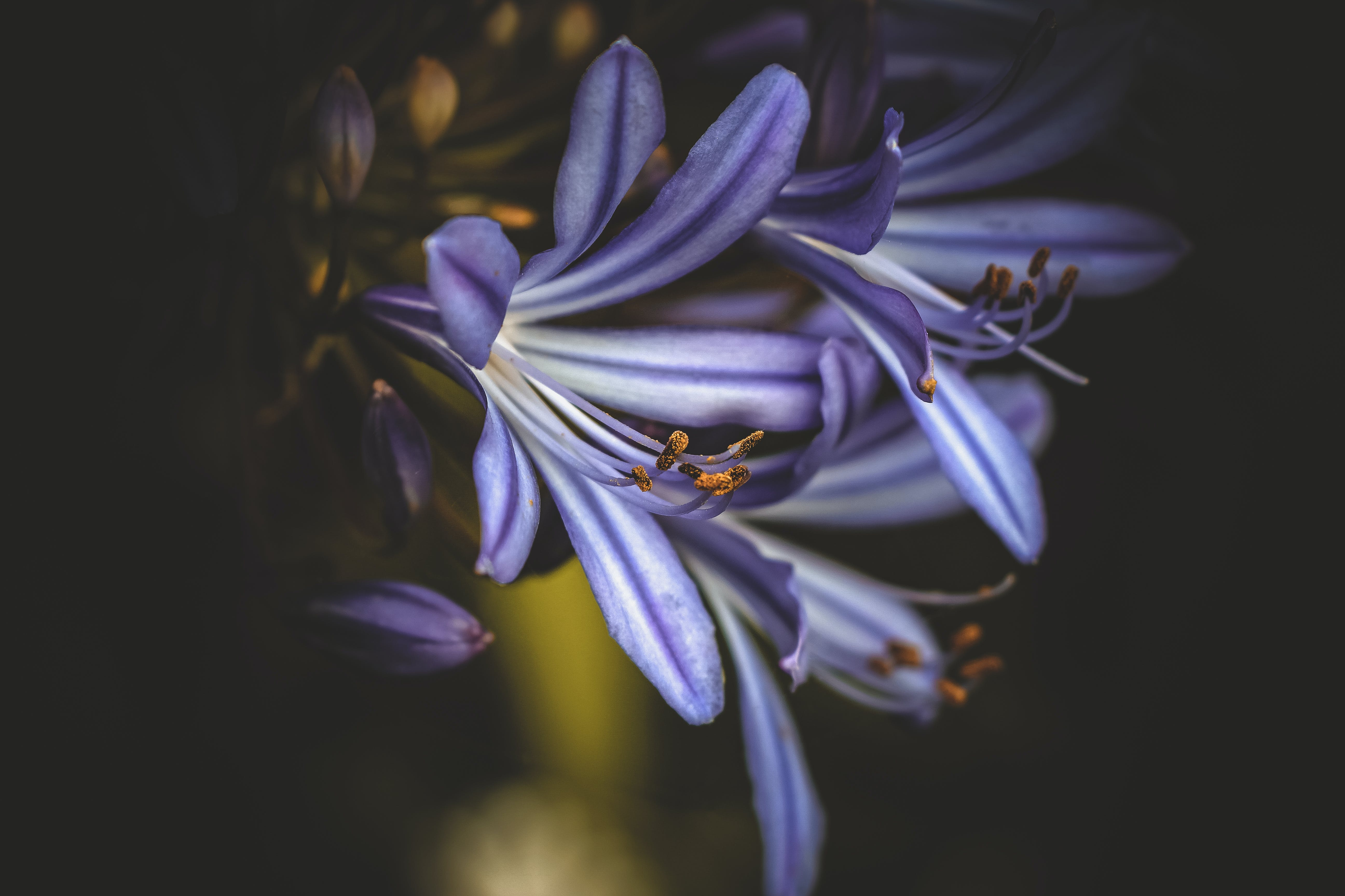 꽃, 꽃이 피는, 꽃잎, 매크로의 무료 스톡 사진