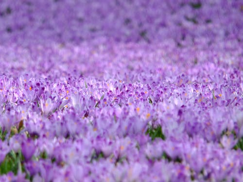 Foto stok gratis berkembang, bunga-bunga, flora, mekar