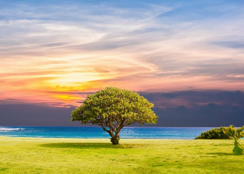 Foto d'estoc gratuïta de aigua, arbre, capvespre, cel
