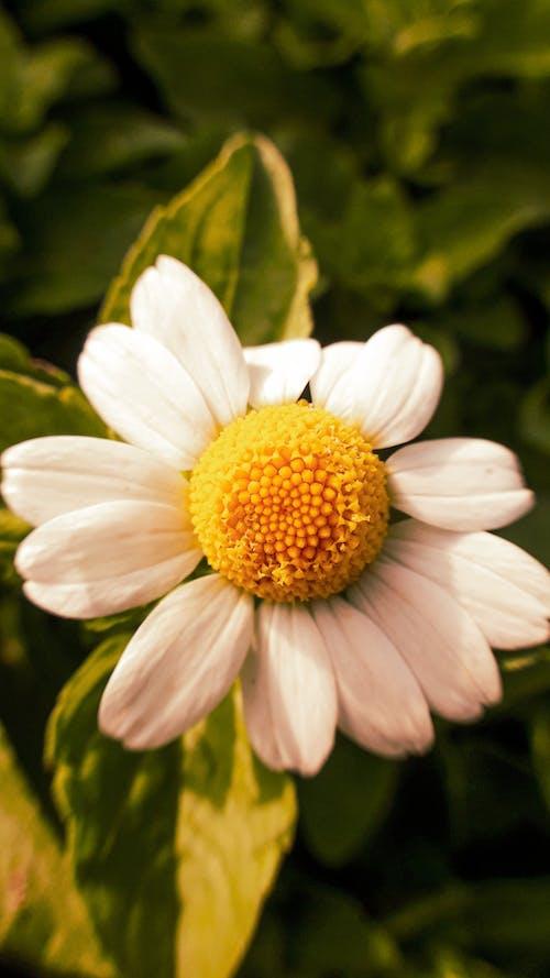 Ảnh lưu trữ miễn phí về cảnh đẹp, Chân dung, chụp ảnh hoa