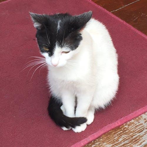 Free stock photo of Felino, felinos, gatito, gato