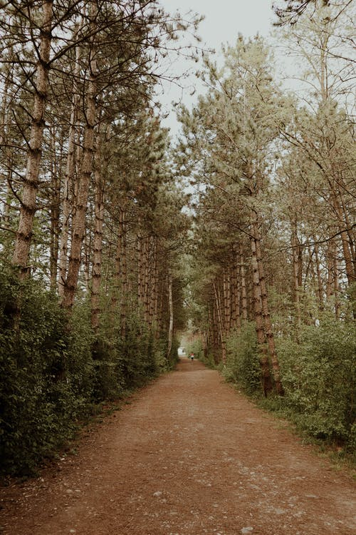 Empty footpath going through tall evergreen trees and green bushes in park at daytime