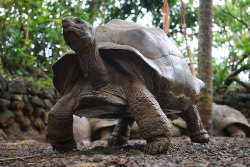 Foto profissional grátis de ameaçado de extinção, amplo, ângulo baixo, animais selvagens