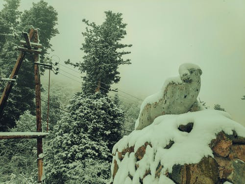 Free stock photo of bishkek, forest, panther