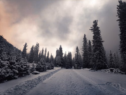 Δωρεάν στοκ φωτογραφιών με δέντρο, χιόνι, Χριστούγεννα, χριστουγεννιάτικο δέντρο