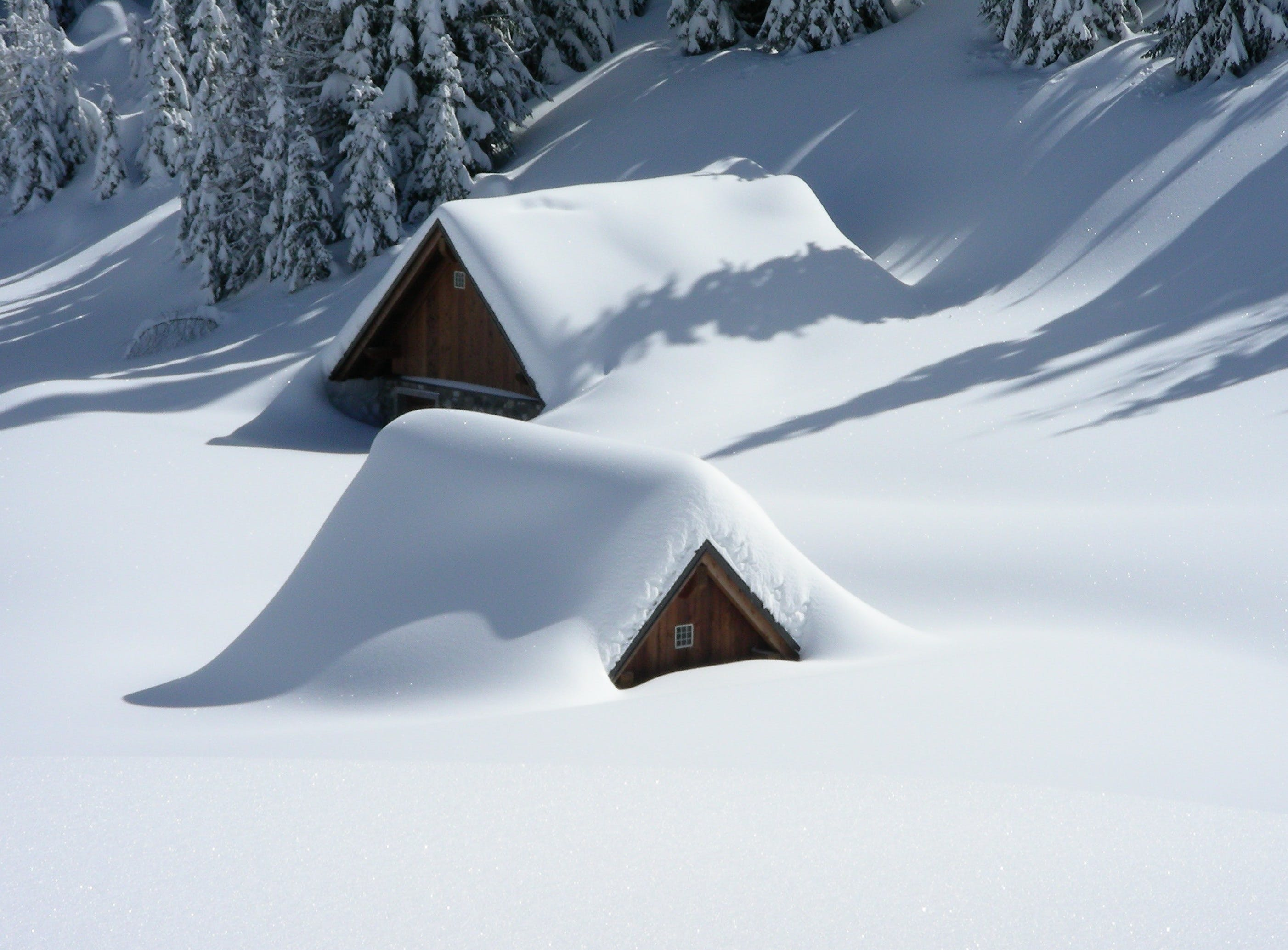 Brown Wooden House Covered With Snow Near Pine Trees