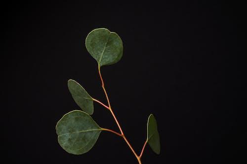 Δωρεάν στοκ φωτογραφιών με αγάπη, ανάπτυξη, βλαστάρι, δέντρο