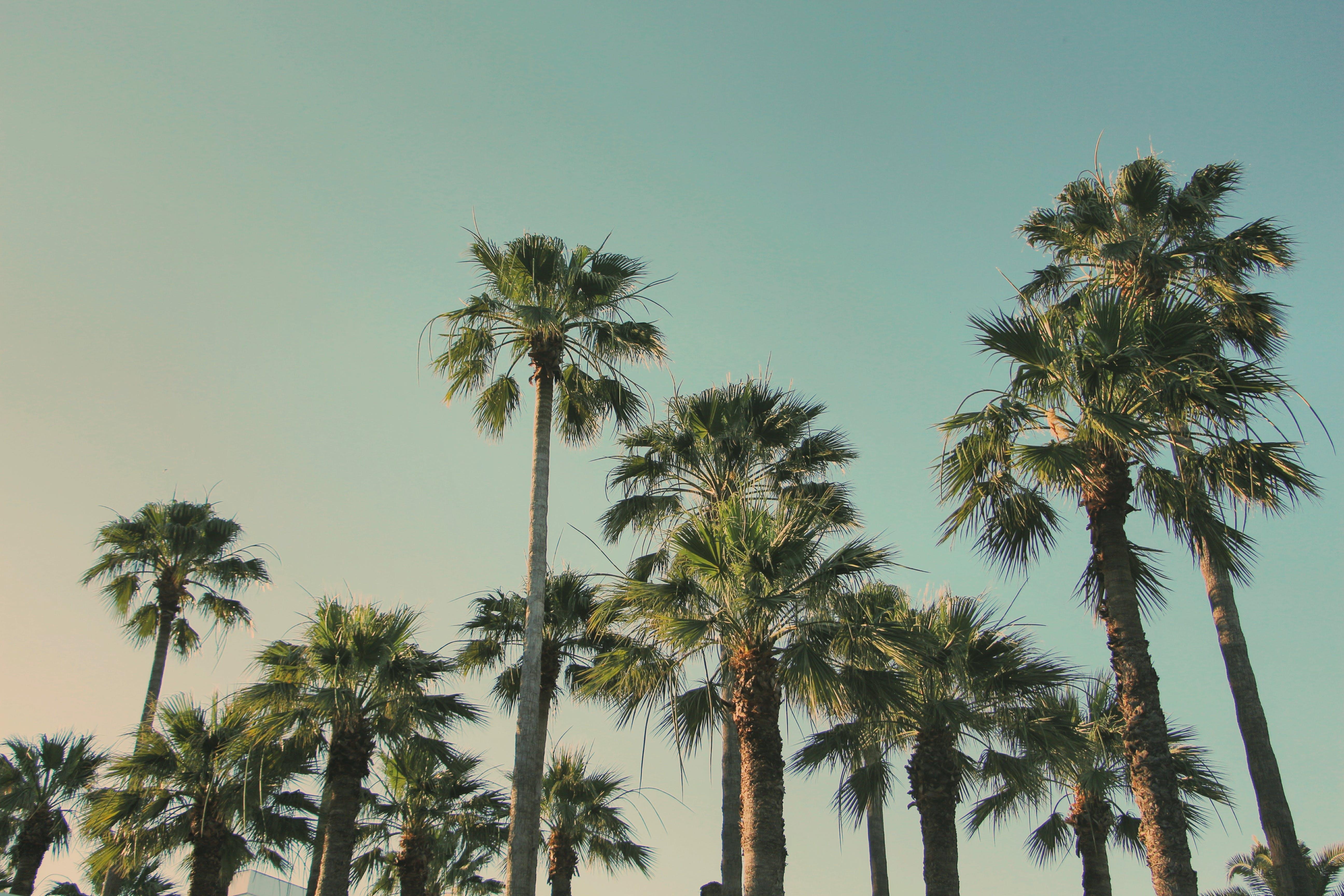 Kostenloses Stock Foto zu himmel, palmen, sommer, wendekreis
