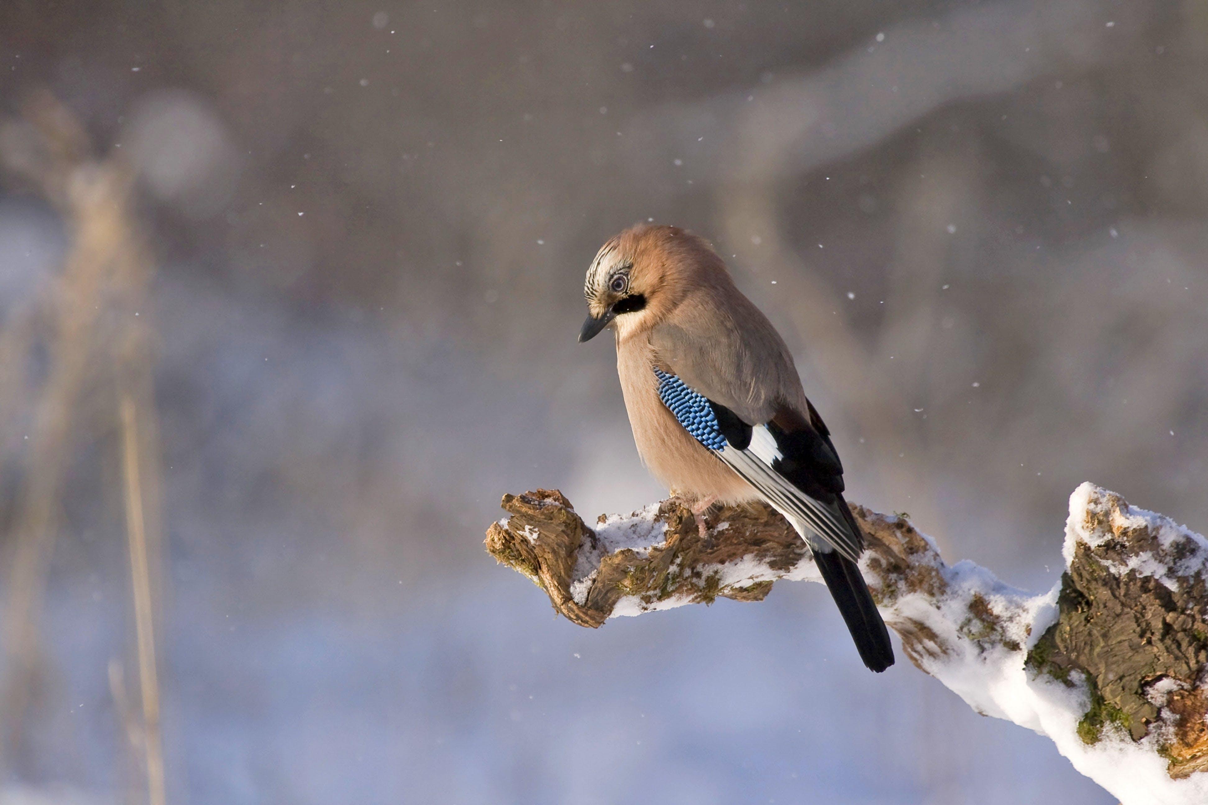 Brown Black and Blue Bird Sitting on Brown Tree Twig