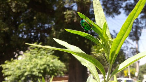 Ilmainen kuvapankkikuva tunnisteilla hyönteiset, luonto