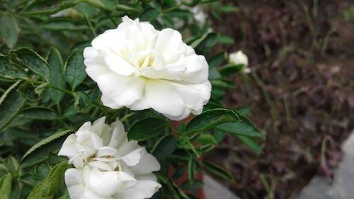 Ilmainen kuvapankkikuva tunnisteilla kasvit, kukat, tehtaat