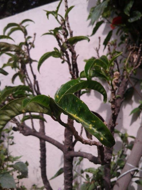 Ilmainen kuvapankkikuva tunnisteilla kasvit, tehtaat