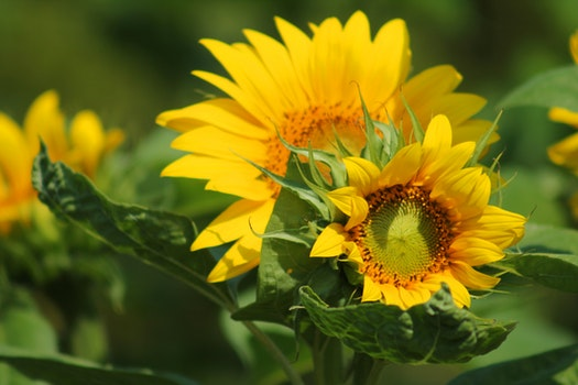 Yellow and Green Leaf Flower during Daytime