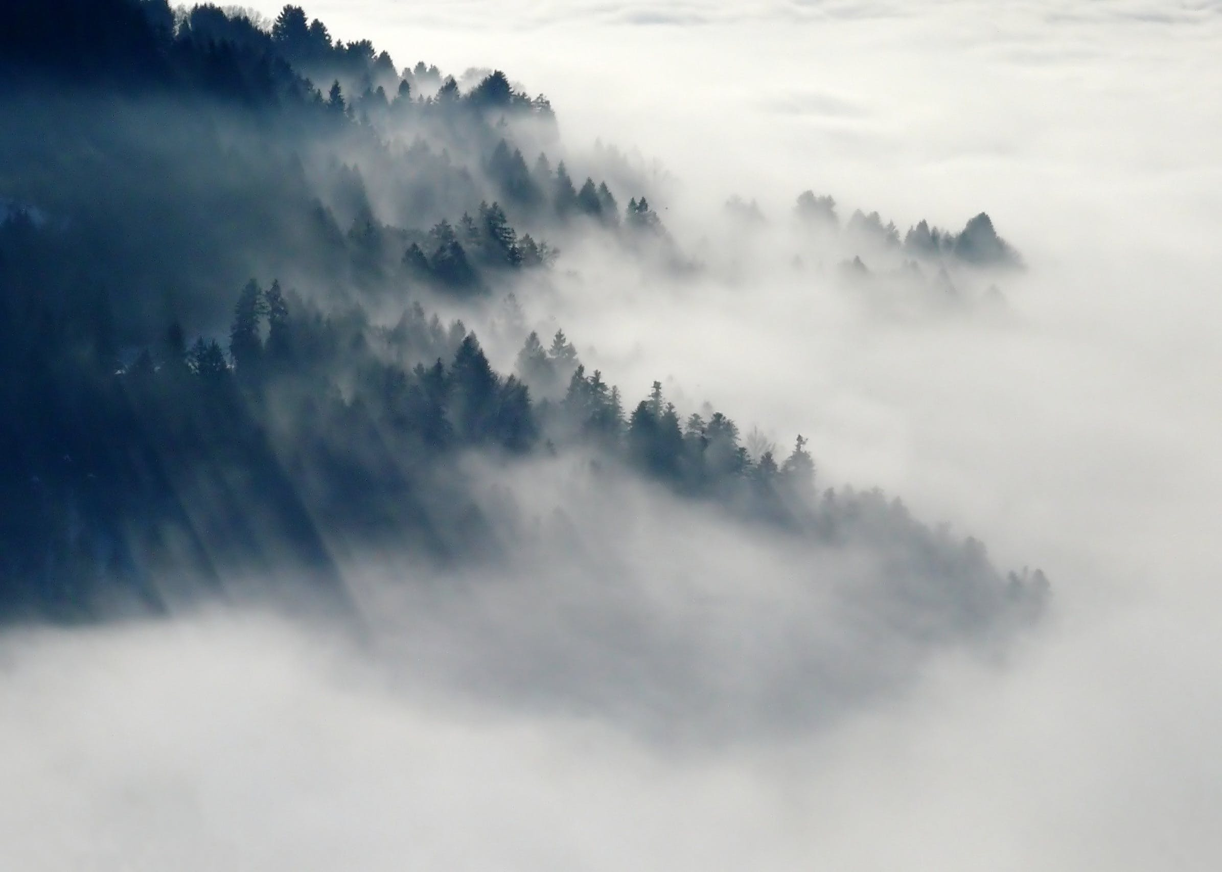 Mountain With Green Leaved Trees Surrounded by Fog during Daytime