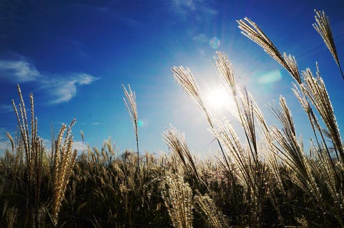 Kostenloses Stock Foto zu feld, gras, himmel, natur