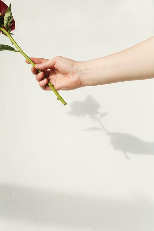 Immagine gratuita di adulto, amore, arte, carta