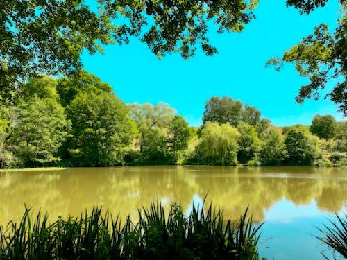 Foto profissional grátis de água, ampthill, bedfordshire, lago