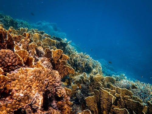 Kostenloses Stock Foto zu exotisch, fisch, koralle, meer