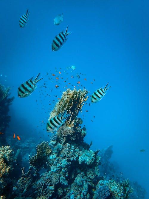 Kostenloses Stock Foto zu aquarium, baden, exotisch, fisch