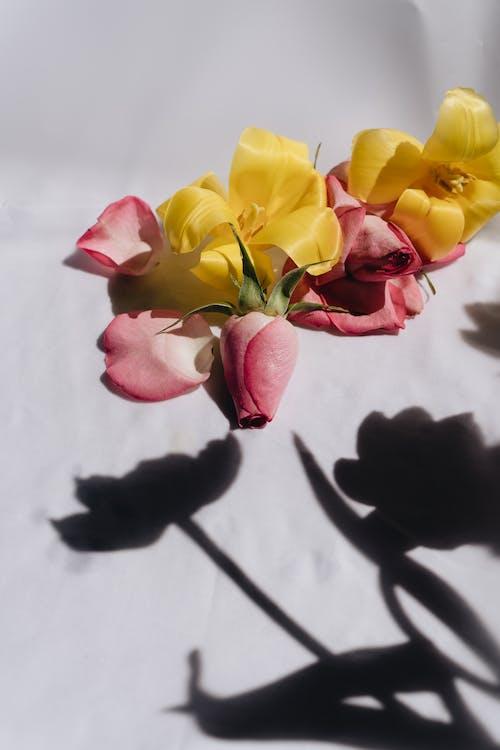 Ảnh lưu trữ miễn phí về cắm hoa, cuộc sống tĩnh lặng, đẹp, hệ thực vật