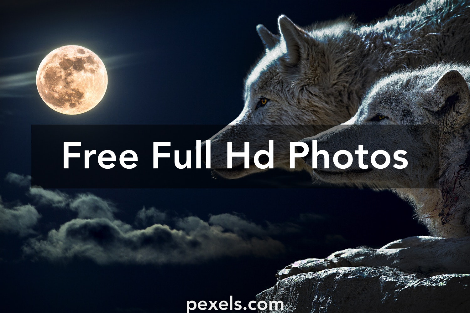1000 Engaging Full Hd Photos Pexels Free Stock Photos