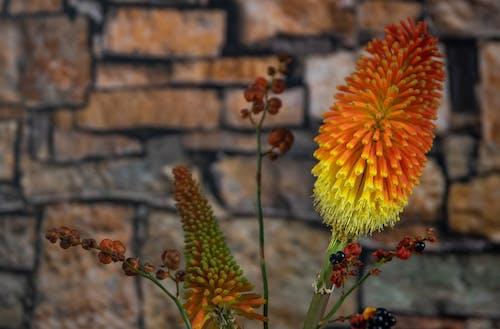 Gratis stockfoto met bloemen, bloemstukken, herfst, herfstkleuren