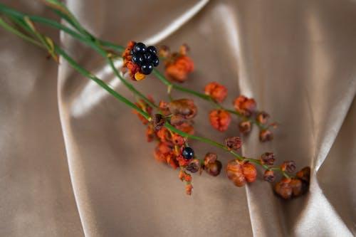 Gratis stockfoto met abstract, abstracte vormen, bloemen, natuur