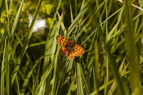 Fotobanka sbezplatnými fotkami na tému fotografia prírody, leto, matka príroda, motýľ