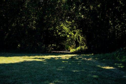 Free stock photo of black, nature, park, sun light
