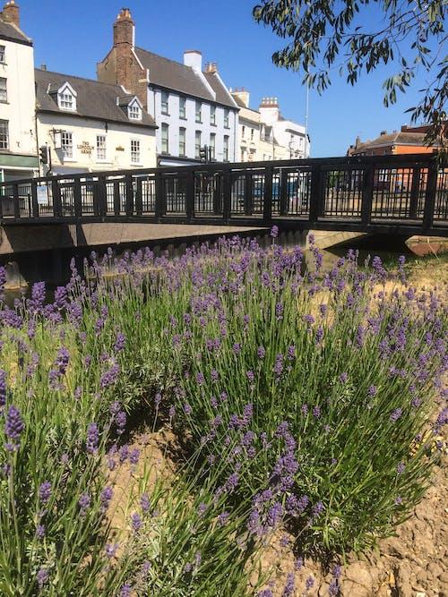 Free stock photo of blue sky, bridge, lavender