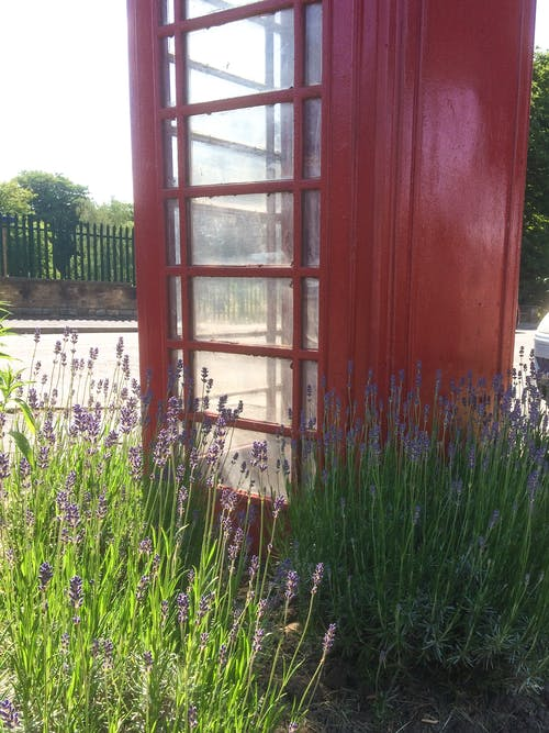 Free stock photo of lavender (flower), red, telephone