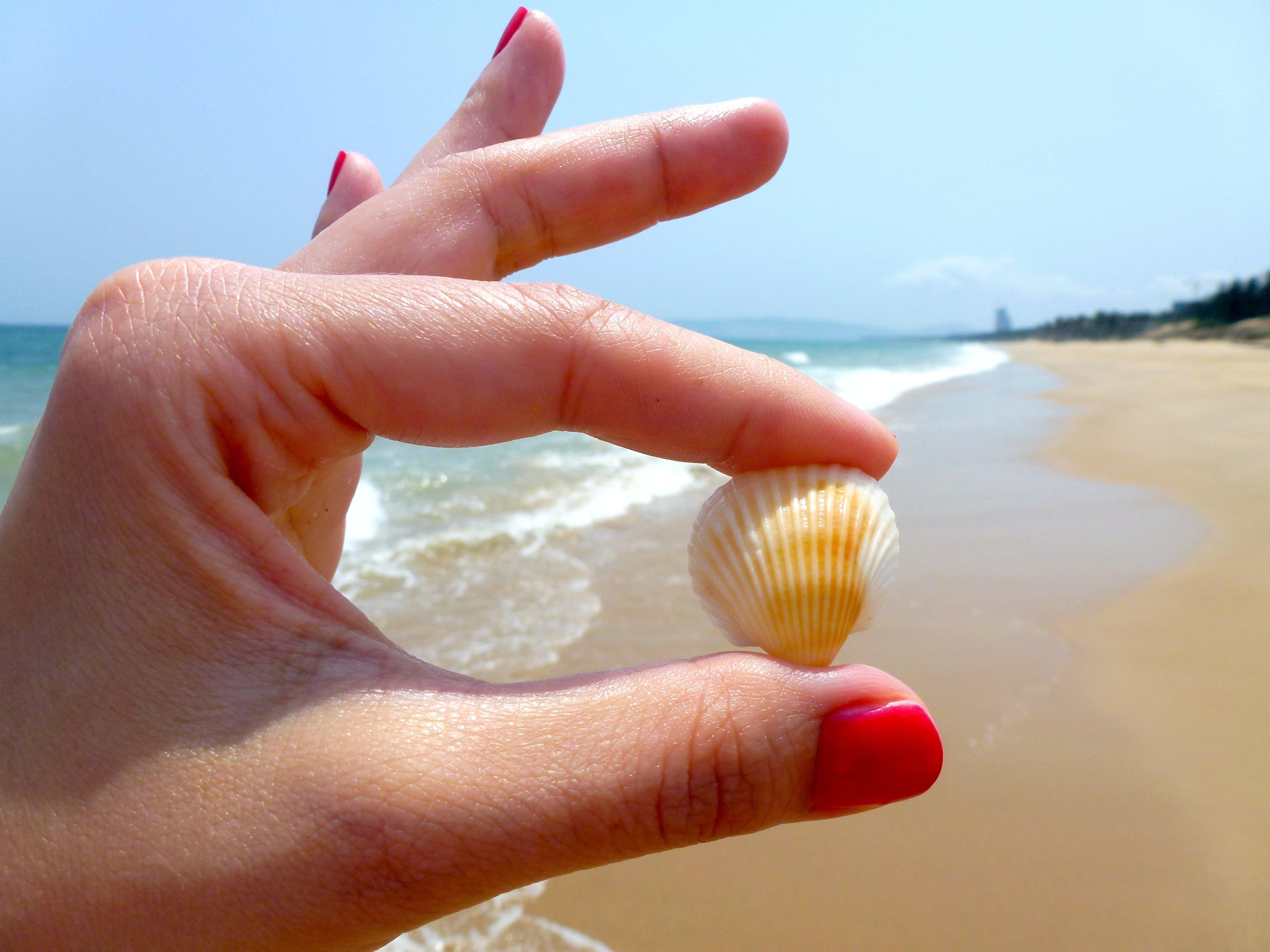 Free stock photo of sea, beach, hands, hand