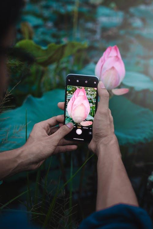 Crop man taking photo of exotic flower