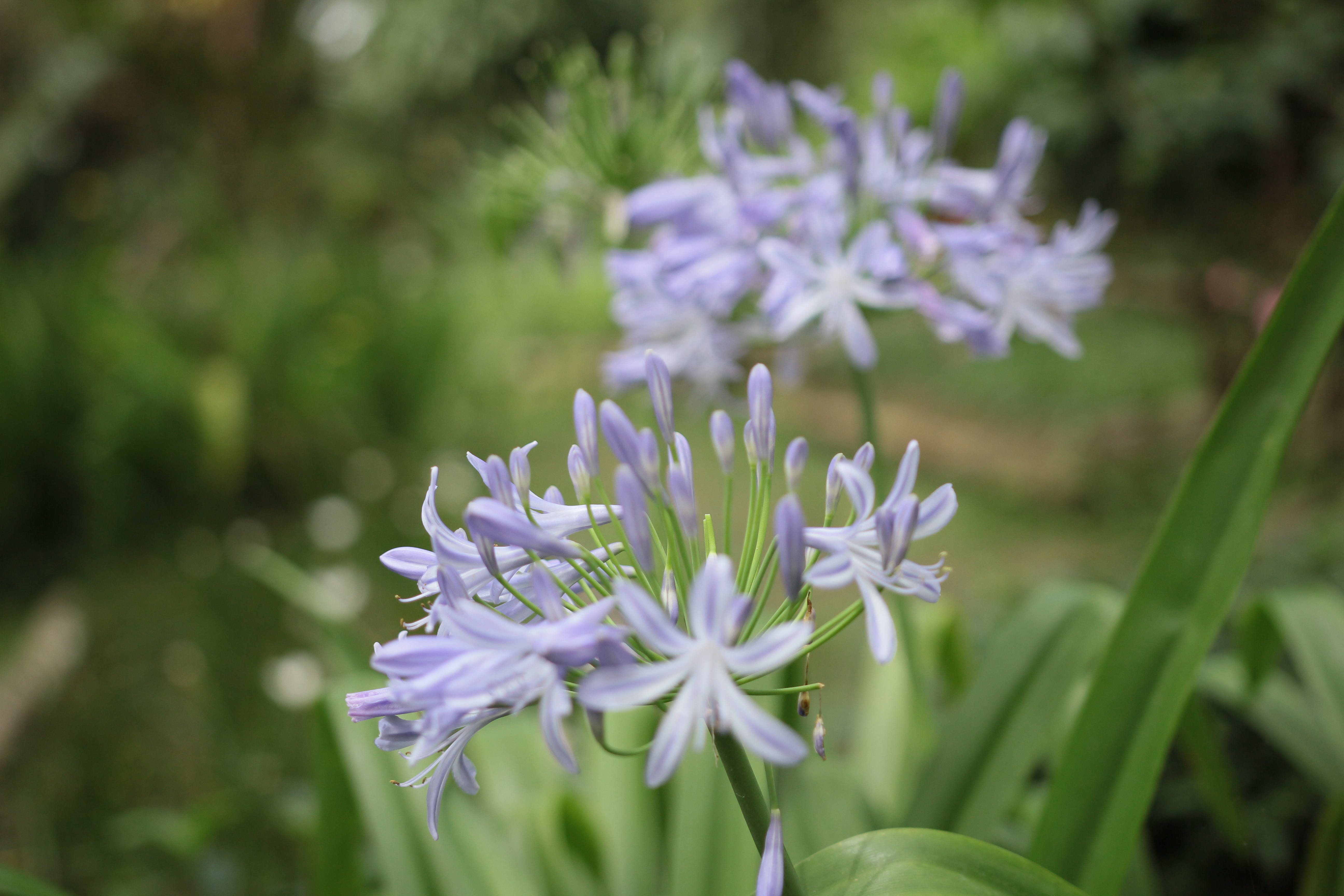 Purple Petaled Flower Selective Focus Photography