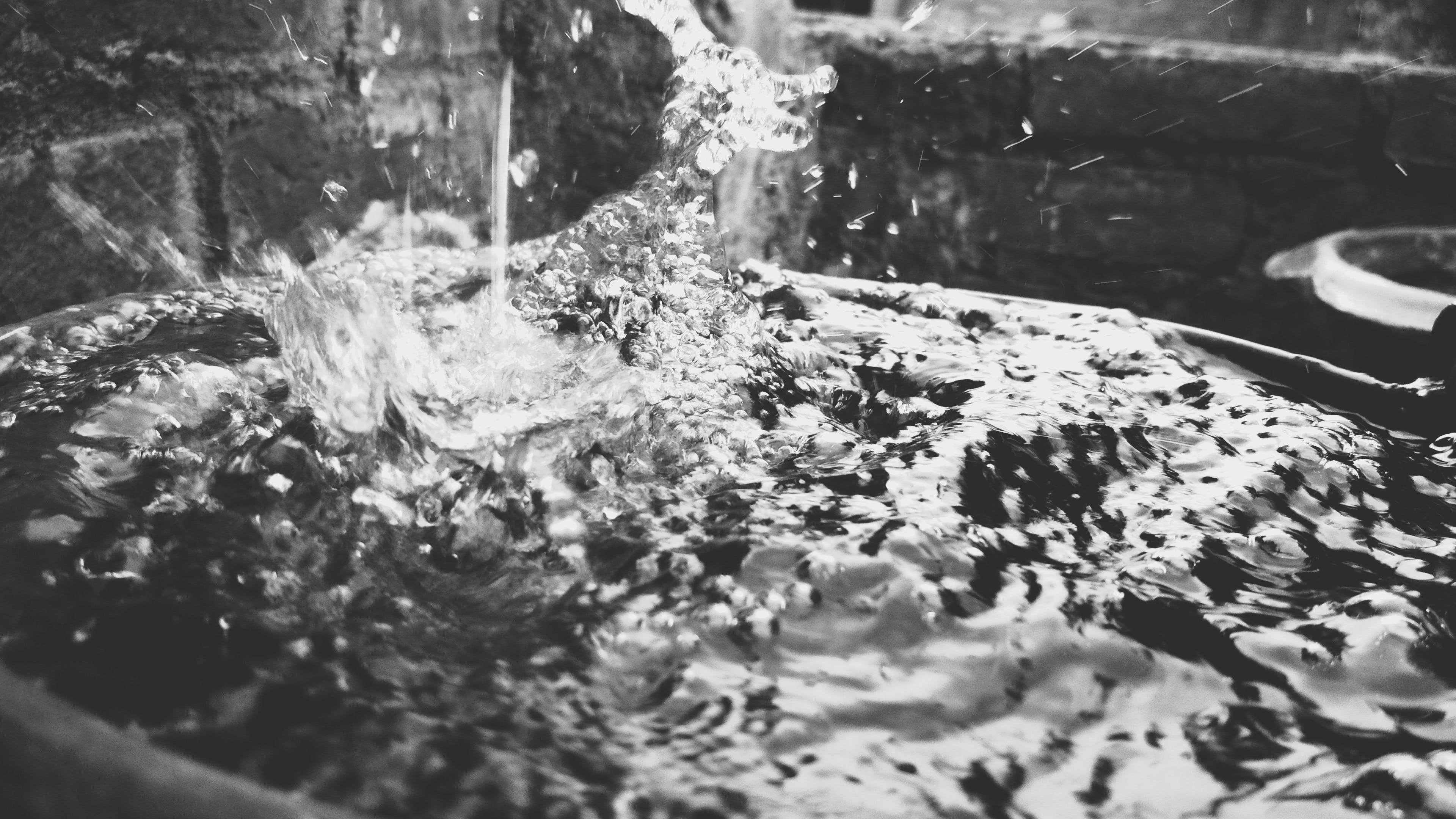 black and white, close -up, drops of water